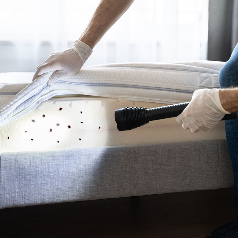 Bed Bugs Pest Control Services in Michigan